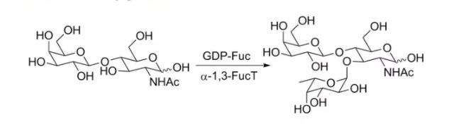 α 1,3-岩藻糖基转移酶 CAS 37277-69-3 EC 2.4.1.65