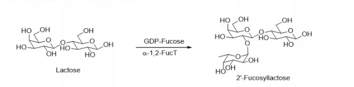 α1,2-岩藻糖基转移酶 CAS 56093-23-3 EC 2.4.1.69