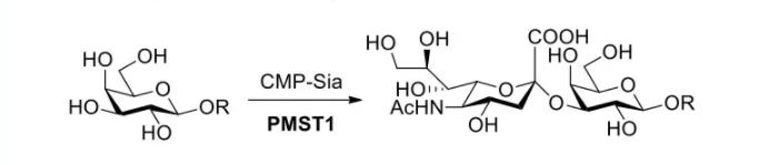α2,3-唾液酸转移酶 CAS 71124-51-1 EC 2.4.99.4