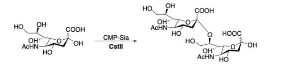 α2,8-唾液酸转移酶 CAS 67339-00-8 EC 2.4.99.8