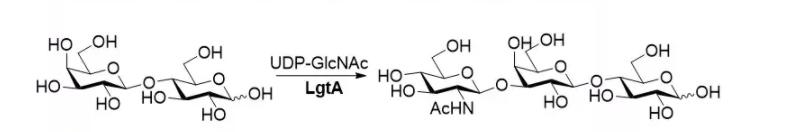 β1,3-N-乙酰基己基转移酶 CAS 37277-64-8 EC 2.4.1.56