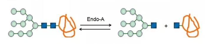 内-β-N-乙酰氨基葡糖苷酶A CAS 37278-88-9 EC 3.2.1.96
