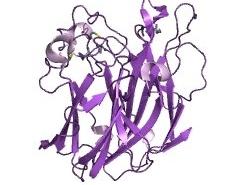糖肽酶CAS 83534-39-8 EC 3.5.1.52 结构式