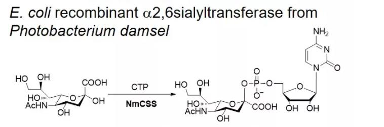 胞苷酸-唾液酸合酶 CAS 9067-82-7 EC 2.7.7.43