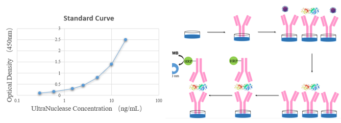 全能核酸酶残留检测