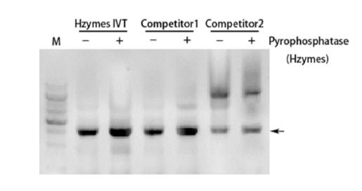 无机焦磷酸酶(酵母)CAS 9024-82-2 产品特点