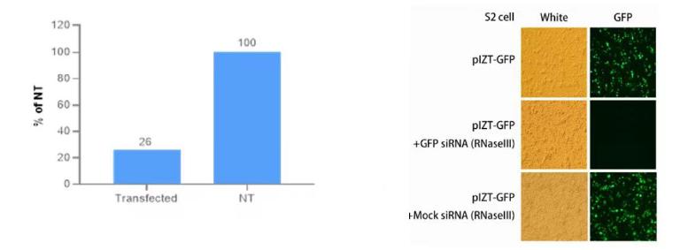 核糖核酸酶 III CAS UENA-0194 产品特点