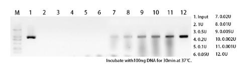 脱氧核糖核酸酶I CAS 9003-98-9 产品特点
